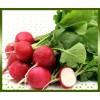 Commande en ligne radis rose livraison légumes à domicile à nice
