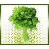 Commande coriandre fraîche livraison panier fruits et légumes à domicile à nice