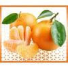 panier clémentine fruits et légumes à domicile à Nice