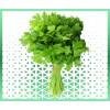 Commande plantes aromatiques coriandre fraîche livraison panier fruits et légumes à domicile à nice