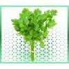 Commande en ligne plantes arômatiques persil frais livraison panier fruits et légumes à domicile à nice